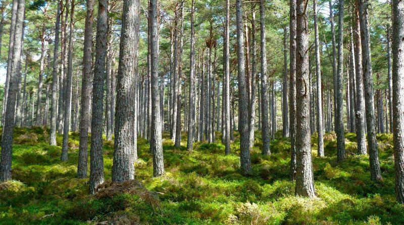 Nowe przepisy w turystyce leśnej. Od wiosny biwaki legalne!