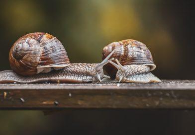 Konwencja wiedeńska obroni ślimaki?