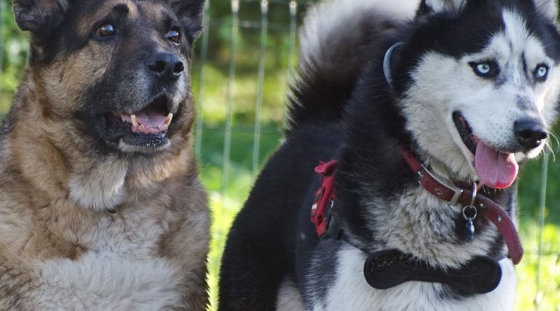 KO i PiS zagłosują wspólnie dla dobra zwierząt?