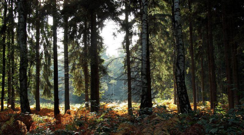 Las dla ludzi, ludzie dla lasu