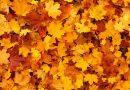Jesienny spacer w parku groźny dla zdrowia?! Wielu powinno go unikać